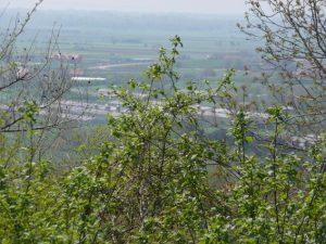 Pozarevac,Srbija,S.JAKOV3